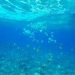Bloops en el Océano
