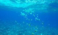 Underwater Spiraling (Fish)